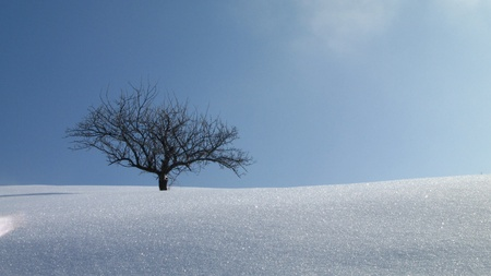 frozen trees: young, lonely apple tree in winter