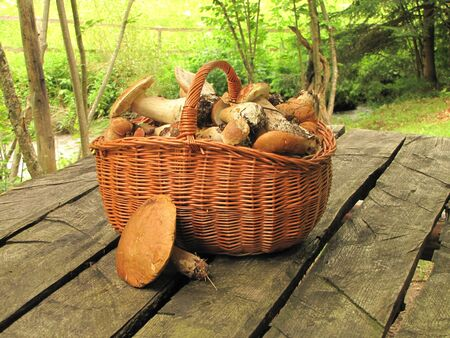 basket full of eatable mushrooms boletus on the table in a forest photo