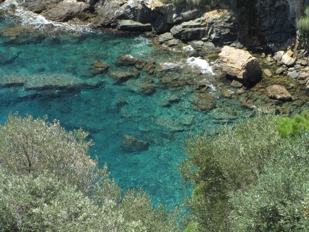 Crystal clean water of Aegean sea and oliva trees photo