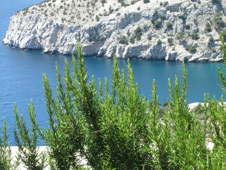White rocky coast, crystal blue sea and green, aromatic rosemary photo