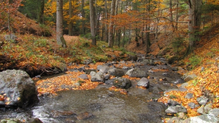 cold and clean stream runs through beech forest in autumn colours photo