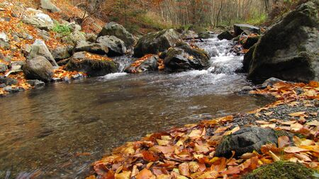 clear mountain creek and yellow and orange foliage photo