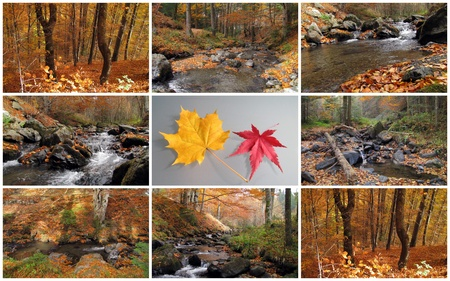 nature picture: autumn collage  Stock Photo