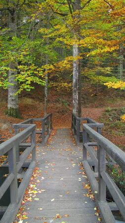 Wooden bridge in autumn forest   Stock Photo - 16048901