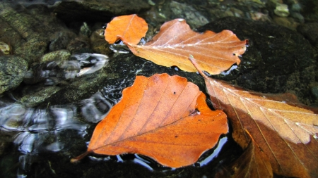 autumn leaves floating on a water surface   photo
