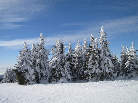hoar: snowy mountain fir forest Stock Photo
