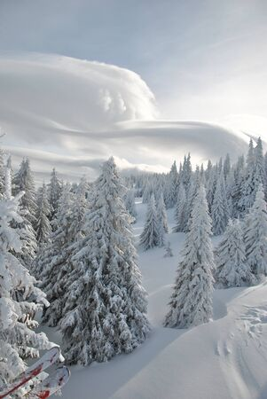 altocumulus: Fir trees covered by snow, view from above and cloud Altocumulus lenticuleris