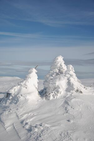 Part of high mountain landscape - small fir trees, frozen and covered by deep snow photo