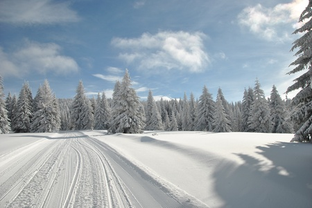 Ski slope through rare fir forest under blue sky with some clouds Stock Photo - 17368926
