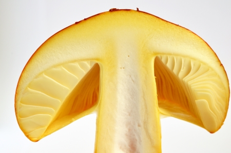 Amanita Caesarea or Caesar's Mushroom, one of the most delicious wild mushrooms, isolated on white background, cross section, extreme close up photo
