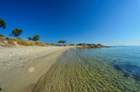 Seascape fisheye view of sandy beach, stones and pine trees in morning sunlight under clear, blue sky, Carydi beach, Chalkidiki, Sithonia, Greece photo