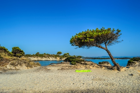 Sandy beach, stones,  Mediterranean pine tree and green, fluorescent towel in morning sunlight under clear, blue sky, Carydi beach, Chalkidiki, Sithonia, Greece photo