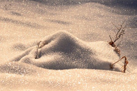 Snowdrift over branches and dry fern leaves in golden sunset light with shiny blurred foreground and background photo