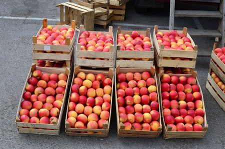 Fresh, organic red apples in wooden crates on wholesale market, ready for sale