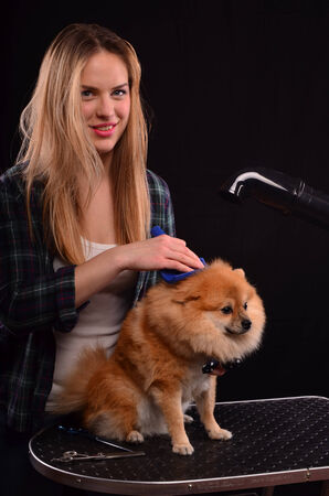 canine: Young canine hairdresser girl styling fluffy fur of Pomeranian dog Stock Photo