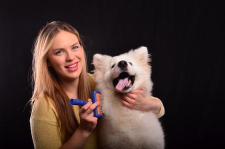 white fur: Muchacha joven peluquero canino peinado piel blanca del perro siberiano Samojed Foto de archivo