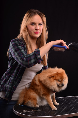 canine: Young, beautiful canine hairdresser girl styling fluffy fur of Pomeranian dog