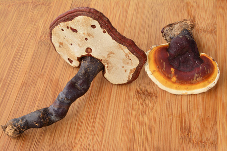 curative: Two Danoderma lucidum or Reishi mushrooms on bamboo wooden table, ready for curative drink preparation