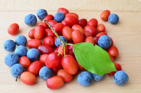 mas: Cornelian cherries or Cornus mas and sloes or Prunus spinosa, mixed on the table, view from above