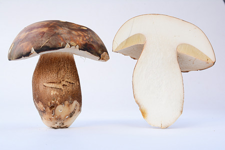 cep mushroom: Boletus aereus, Dark cep or Bronze bolete mushroom, highly prized and much sought-after edible mushroom in the family Boletaceae isolated on white background, cross section, both sides