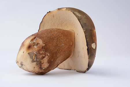 cep mushroom: Boletus aereus, Dark cep or Bronze bolete mushroom, highly prized and much sought-after edible mushroom in the family Boletaceae isolated on white background
