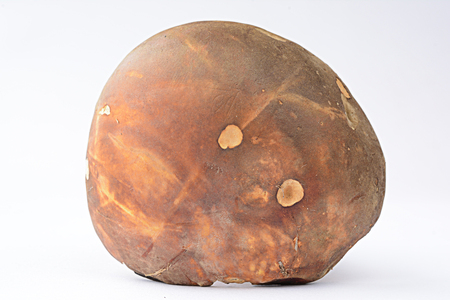 cep mushroom: Boletus aereus, Dark cep or Bronze bolete mushroom over white background, view from above
