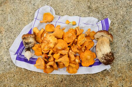 Some ingredients for a stew, ready for cleaning and cooking, freshly harvested wild mushrooms, Chanterelle and Boletus, some garlic on clean cloth on stone table