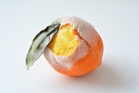 Naranja podrida con hojas secas, corteza dañada y cubierta con moho blanco aislado sobre fondo blanco.