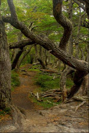 tierra del fuego: Ushuaia, Tierra del Fuego, Argentina. Stock Photo