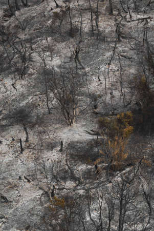patagonia: Forest fires, Patagonia, Argentina