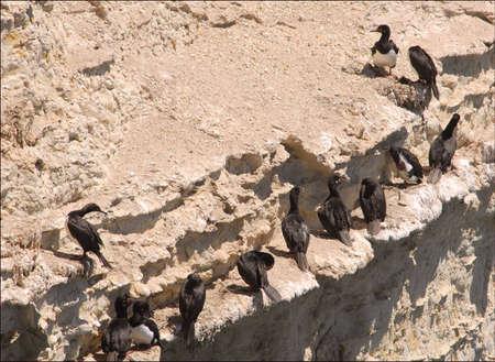 cormorants: Cormorants, Patagonia, Argentina