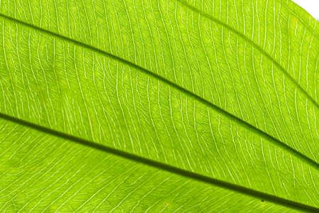 green texture  photo