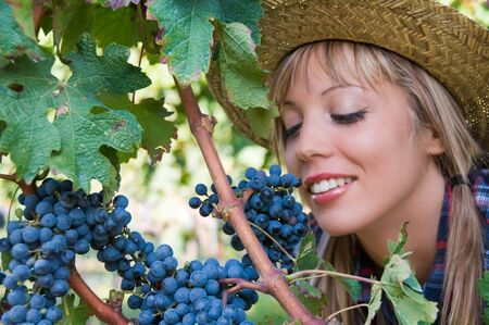 Young woman peasant who looks the grapes in the vineyard Stock Photo