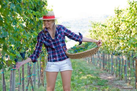 Smiling woman in the middle of the vineyard photo