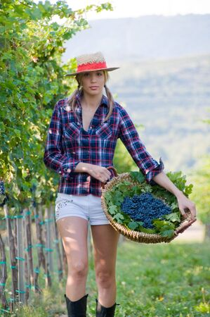 Smiling woman walks with the harvest of grapes from the vineyard