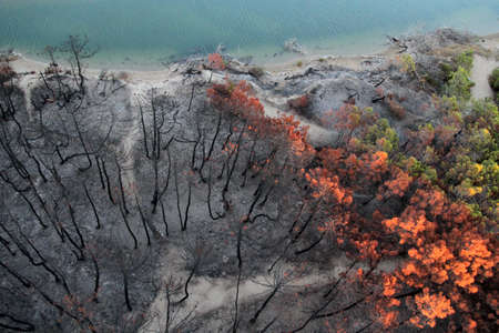 Pine forest burned