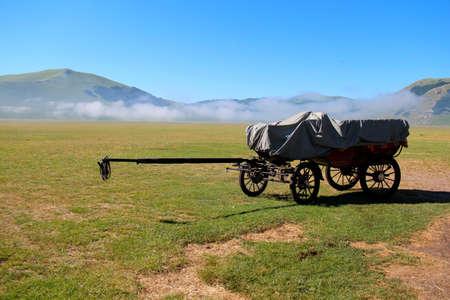 chariot horses at grassland Stock Photo