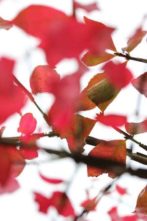 hojas de colores: Rama con hojas de colores en oto�o