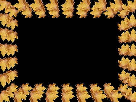 Frame from leaves with space for copy or photo Stock Photo - 5619705
