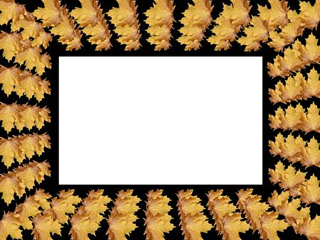 Frame from leaves with space for copy or photo photo