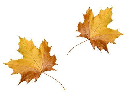 leaves wallpaper Фото со стока
