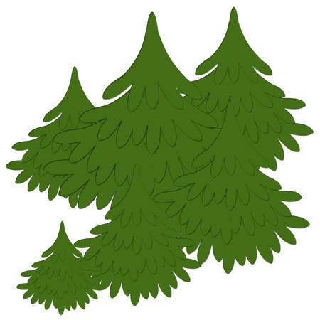 Fir trees photo