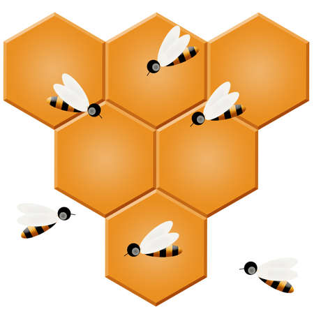 Honeycomb and bees photo