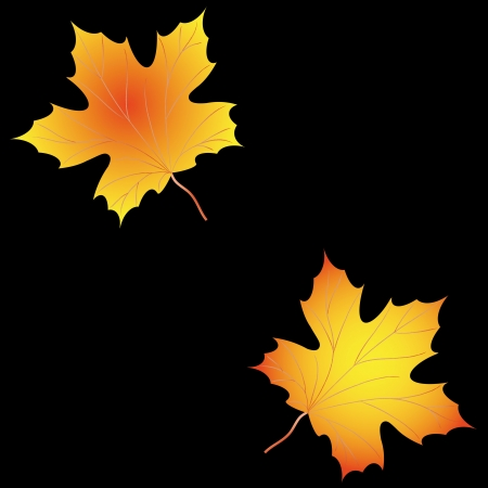Autumn background with leaves of maple Vector
