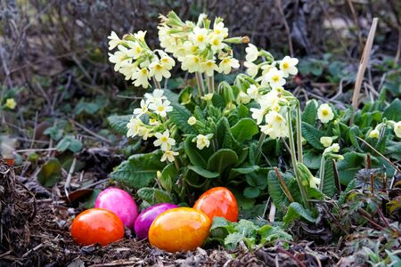 colored eggs for easter in front of a flower photo