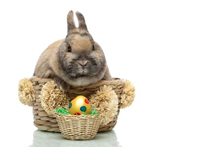 Cute little Easter bunny breeding in basket.   In front of him is a dottetd Easter egg. Isolated on white background. photo