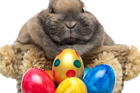 Little cute Easter bunny breeding in basket. In front of him are colored easter eggs. Isolated on white background. Stock Photo - 6596553