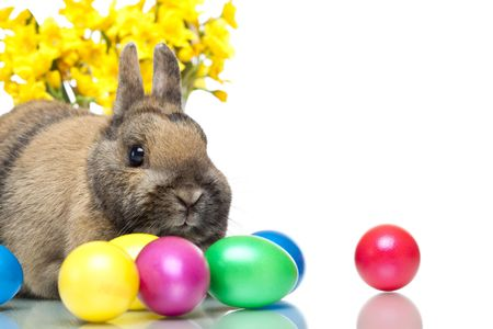 Easter bunny sitting beside colourful Easter eggs and daffodill. Isolated on white Background. Stock Photo - 6632215