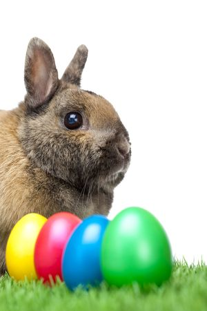Easter bunny sitting in green meadow and in front of it are green, blue, red and yellow Easter eggs. Isolated on white Background. Stock Photo - 6632217