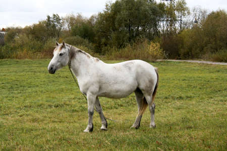 White horse on a field  photo